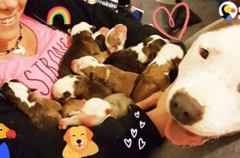 First-time Mom introduces her puppies to her Foster mom